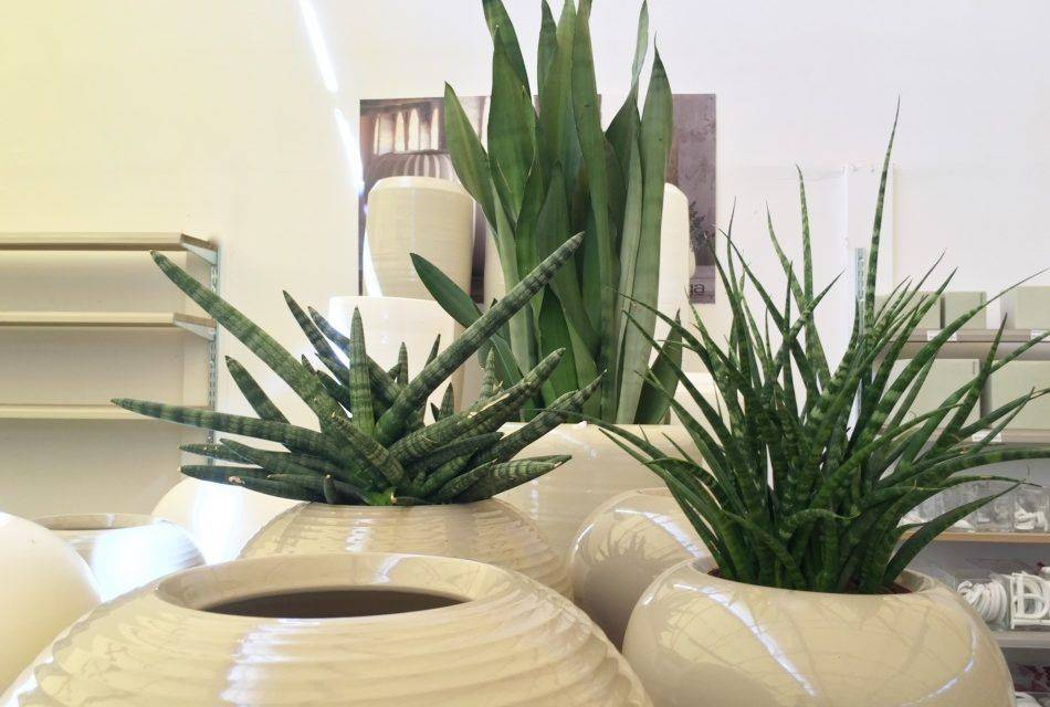 Piante che purificano l 39 aria garden bulzaga - Piante che purificano l aria in casa ...