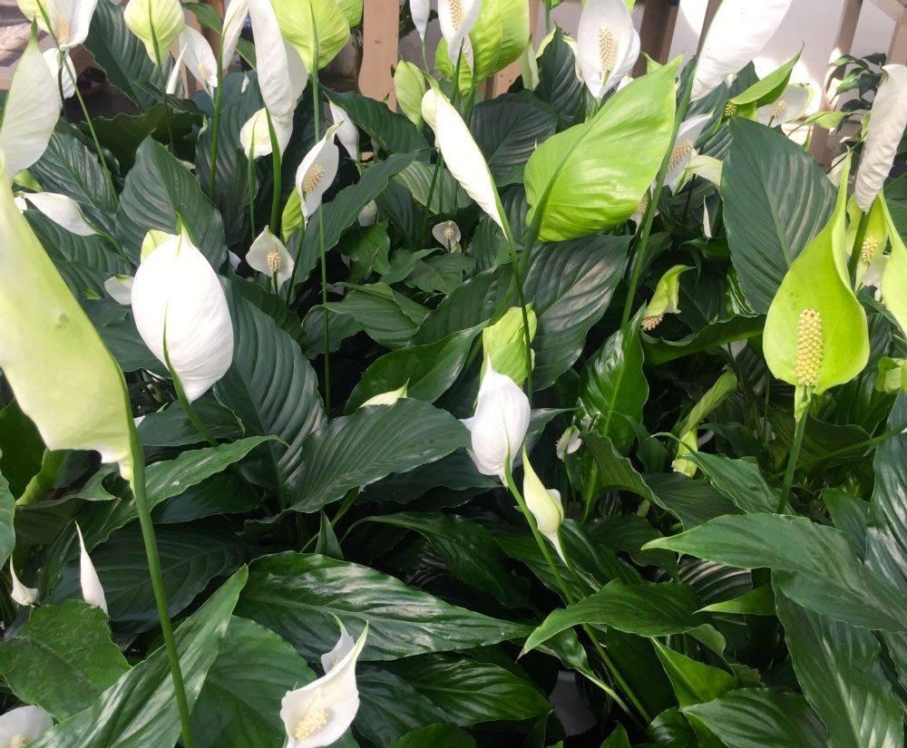 Piante show garden bulzaga - Piante che purificano l aria in camera da letto ...