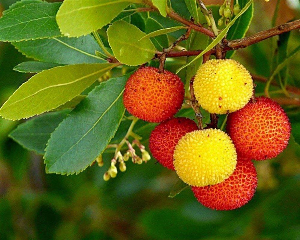 Frutti dimenticati e altre prelibatezze